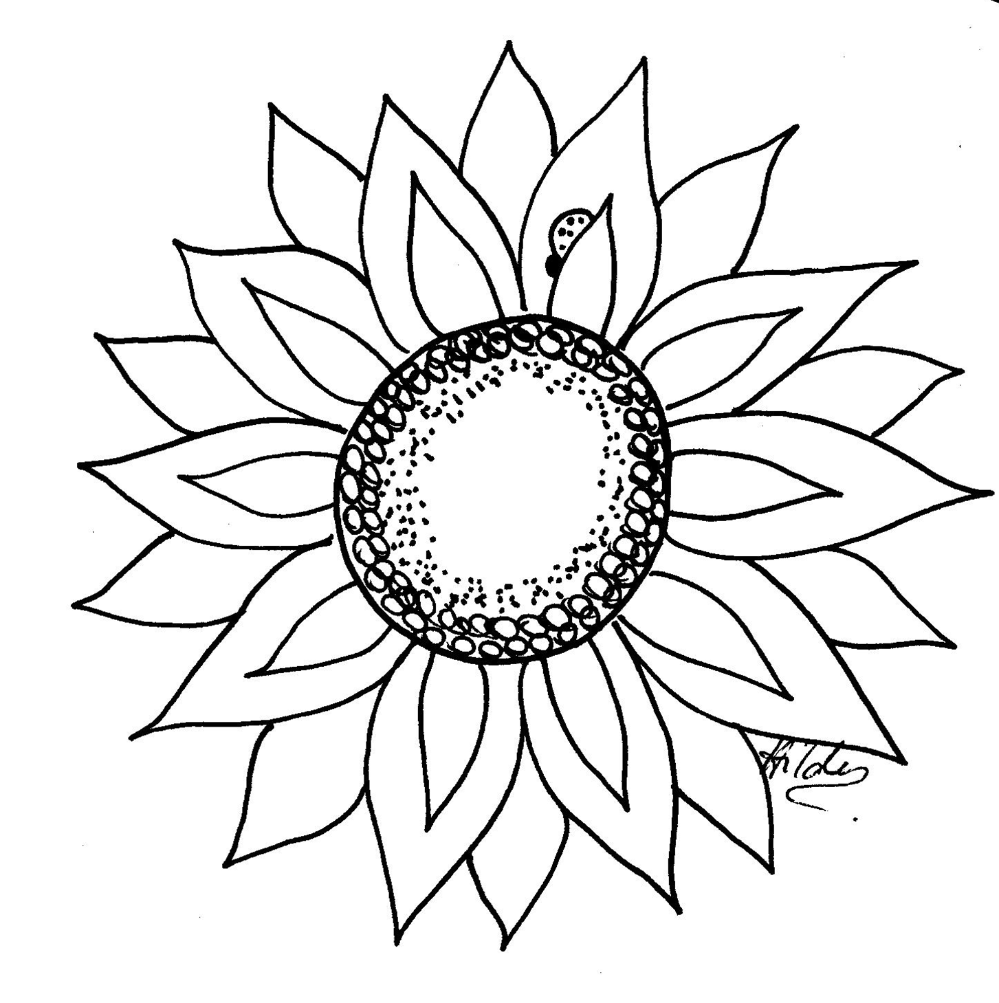 Sunflower Outline Clipart - Clipart Suggest