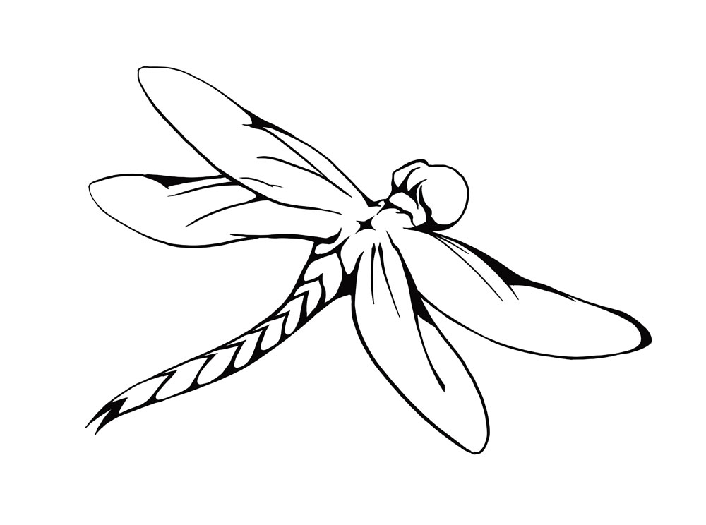 Drawing Dragonfly Clip Art Car Pictures