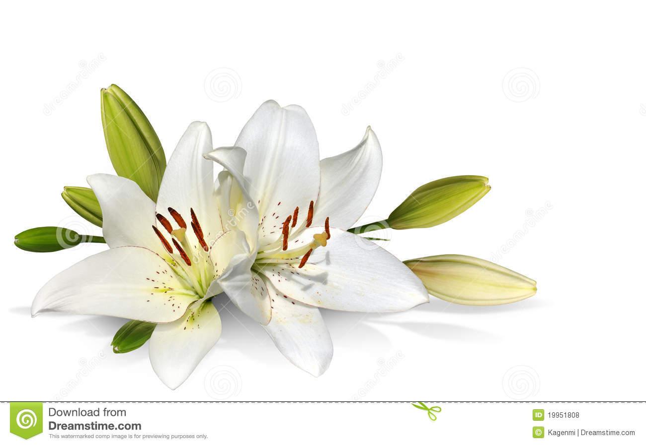 Easter flower border clipart suggest