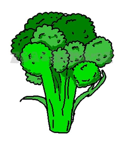 Broccoli Clip Art Broccoli Clipart