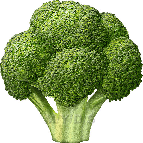 Broccoli Clipart Picture   Large