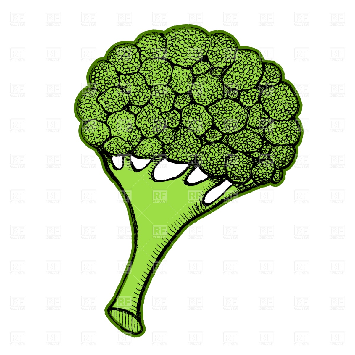 Broccoli Download Royalty Free Vector Clipart  Eps