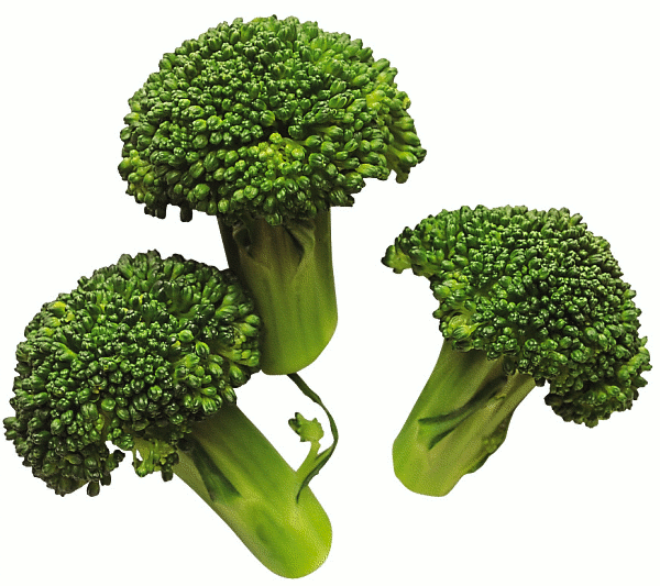 Broccoli   New Hope For Breast Cancer Sufferers  Sulforaphane