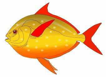 Free Red Finned Fish Clipart   Free Clipart Graphics Images And