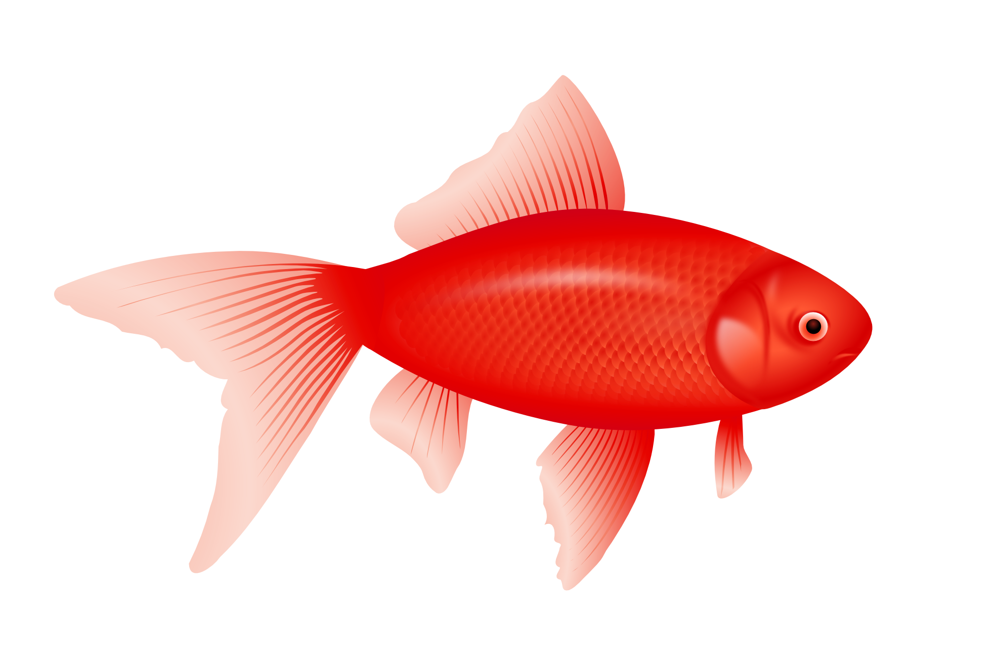 Red fish clipart clipart suggest for Image of fish