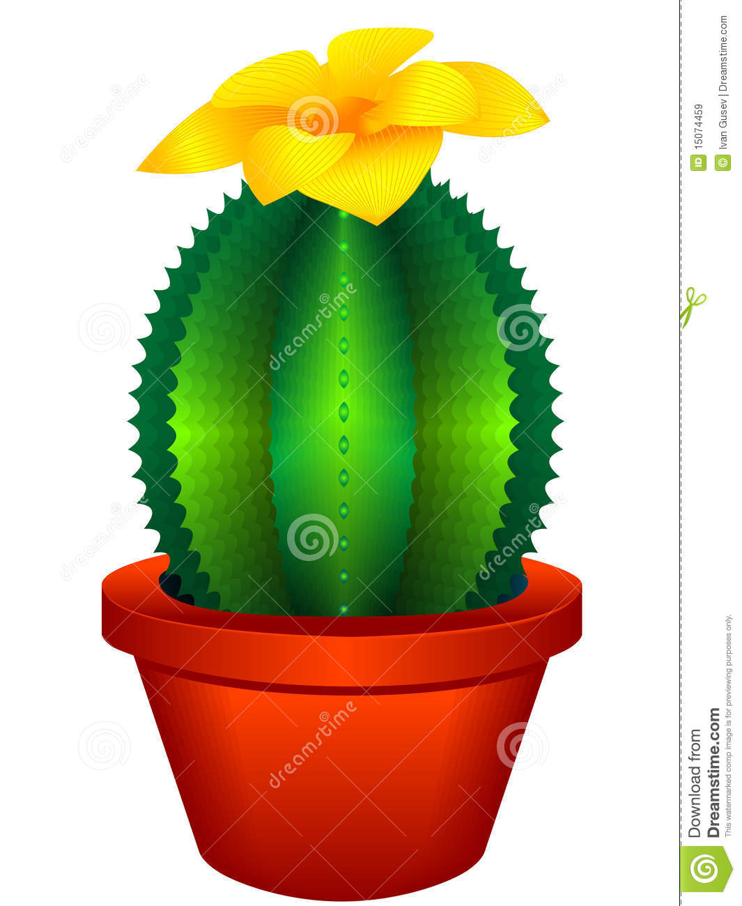Indoor Plant A Cactus Royalty Free Stock Images   Image  15074459