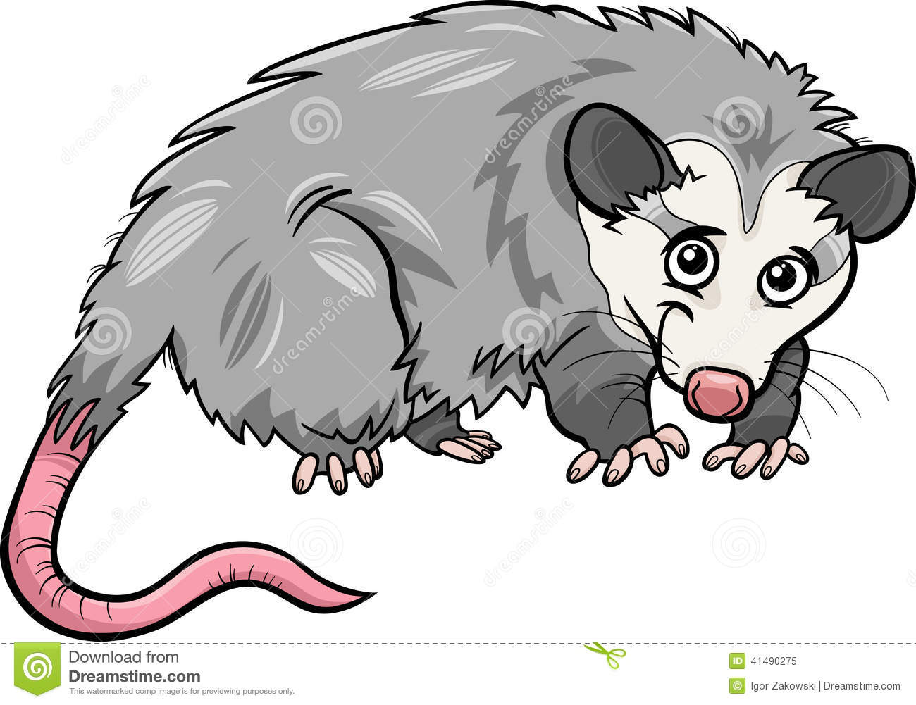 Opossum Illustration Opossum Animal Cartoon Illustration