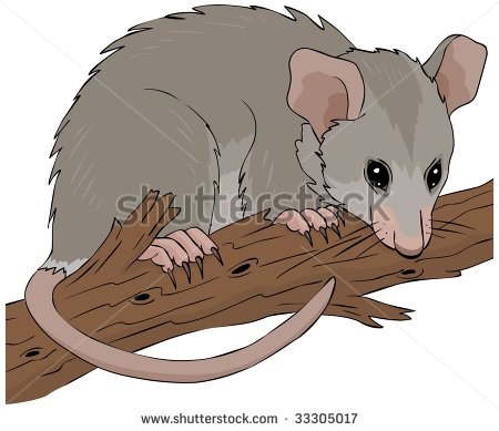 Possum Hanging On A Tree Branch Vector Illustration   Stock Vector