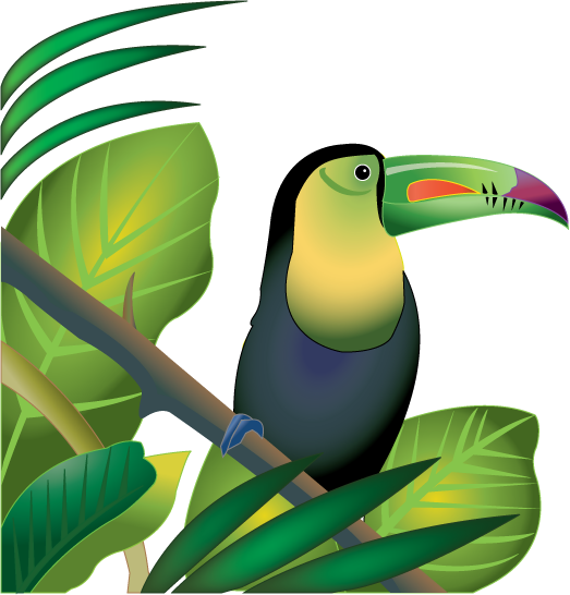 Free Clip Art  Animals   Birds   Toucan In Rainforest Color