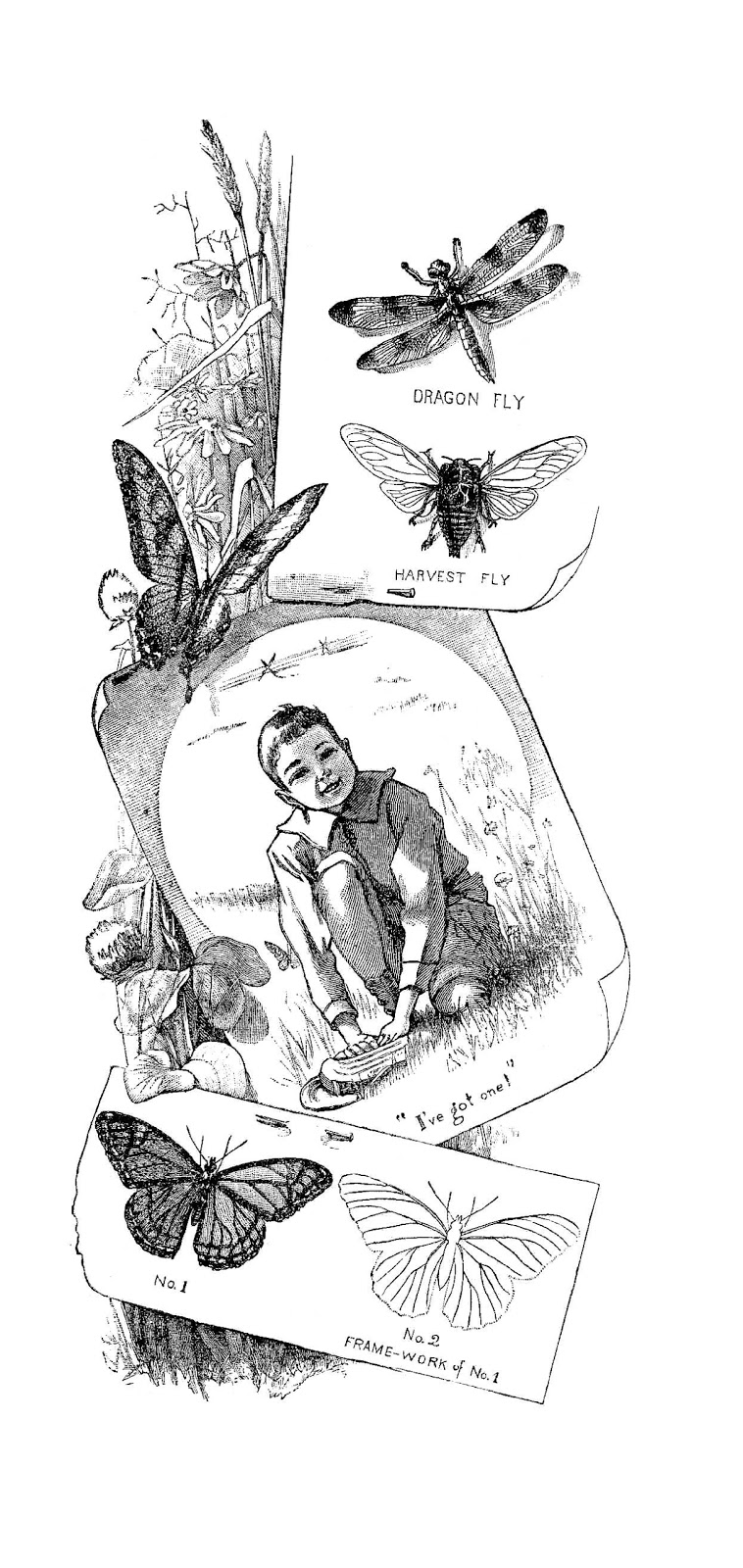 Black And White Illustration  Insect Clip Art From Victorian Storybook