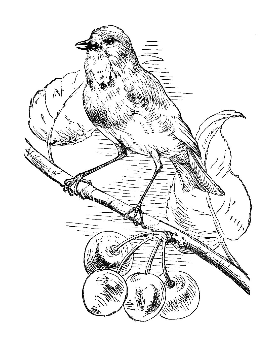 Free Black And White Illustration  Bird Clip Art From Victorian