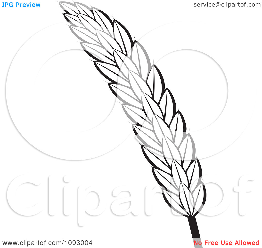 wheat stalk clip art black and white sketch coloring page