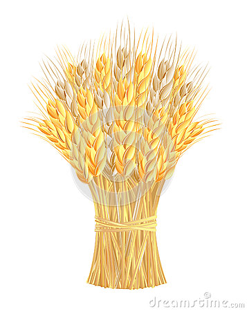 Corn Stalk Bundle Clipart Sheaf Wheat Ears 26199398 Jpg