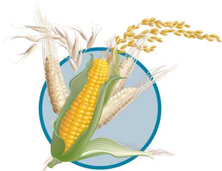 Corn Wheat Ear   Illustrations   Logopub   The World Largest Logos