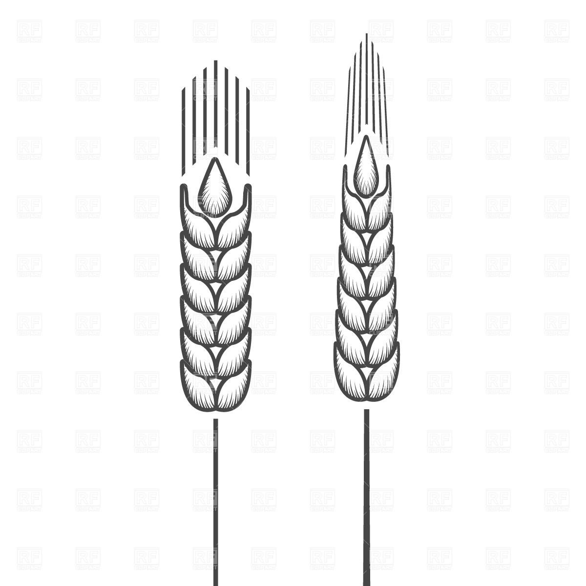 Wheat 648 Food And Beverages Download Royalty Free Vector Clipart