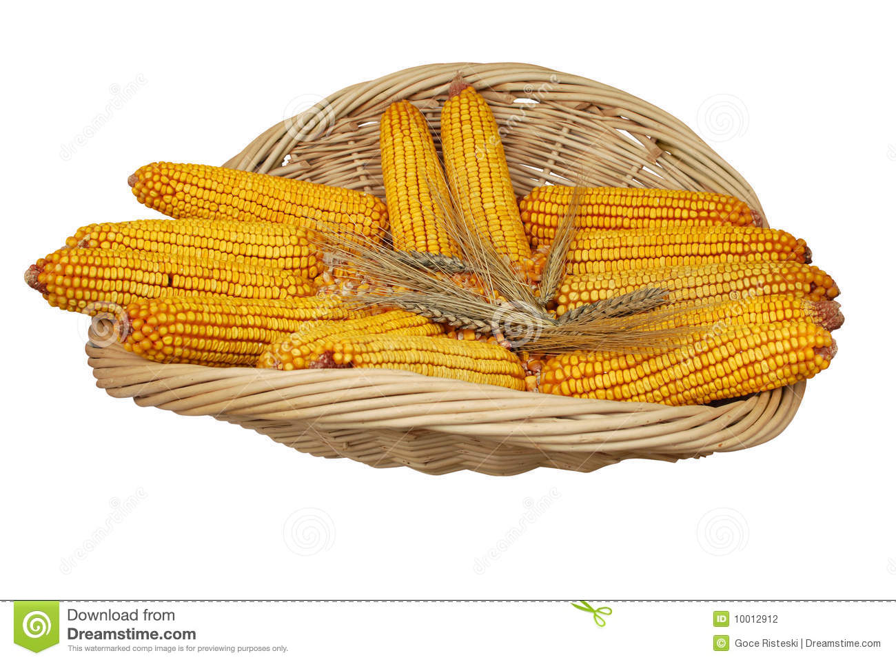 Wheat And Corn Stock Photography   Image  10012912
