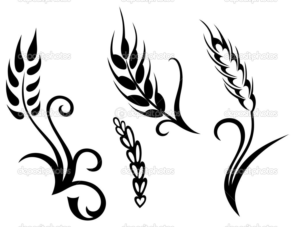 Wheat And Rye   Stock Vector   Kreativ  11446841