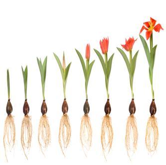 How Can I Help Others Grow In Faith