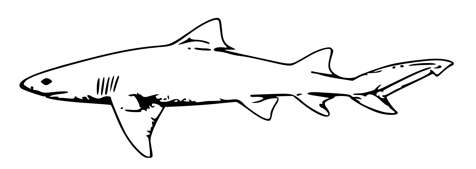 Book Shark Clipart - Clipart Kid