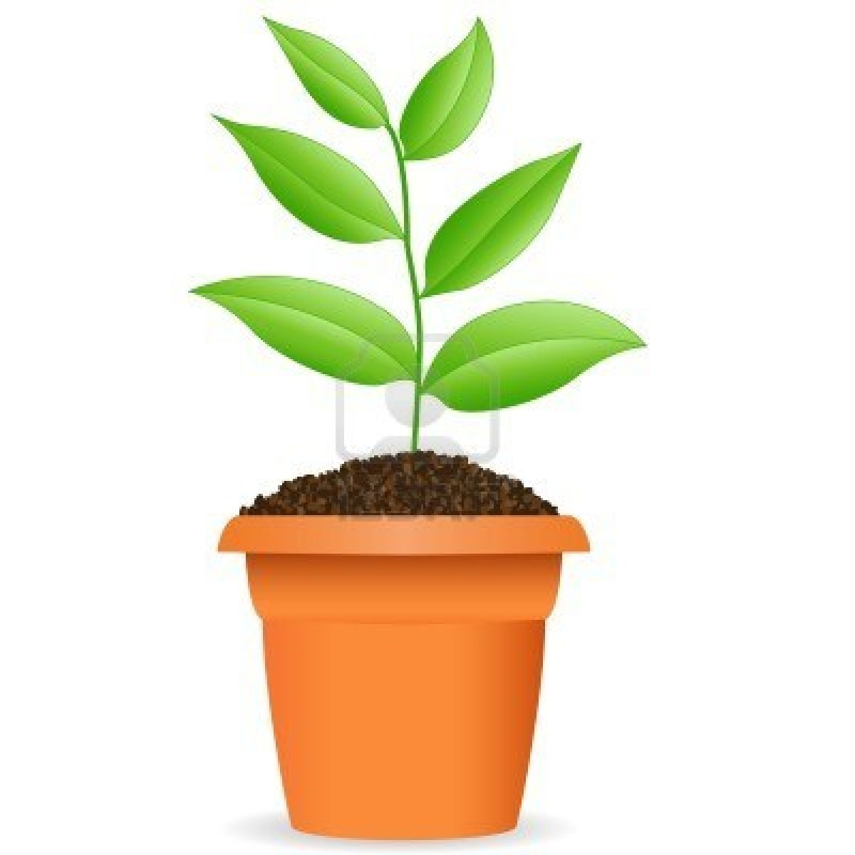clipart flower in pot - photo #29