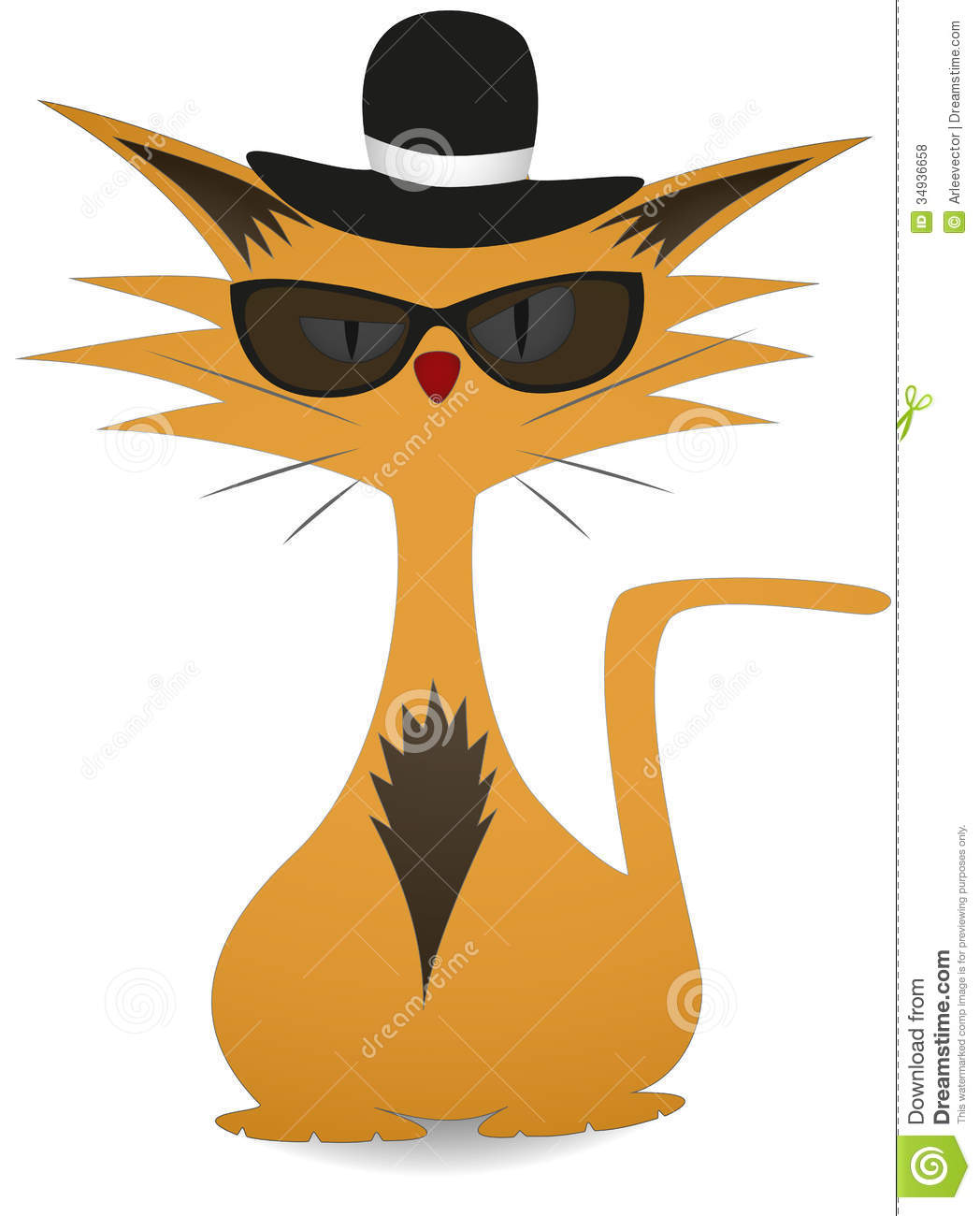 Cool Cat Royalty Free Stock Photos   Image  34936658