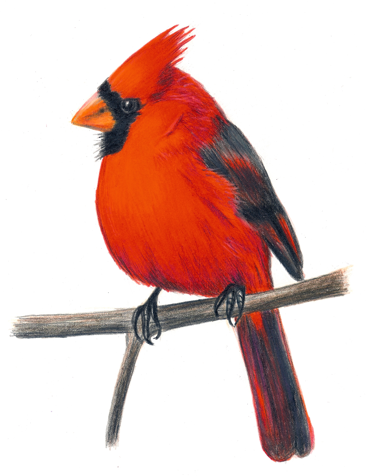 Clip Art Cardinal Clip Art winter cardinal bird clipart kid folioglyphs cardinal