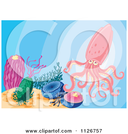 Of A Pink Squid In The Ocean   Royalty Free Vector Clipart By Colematt