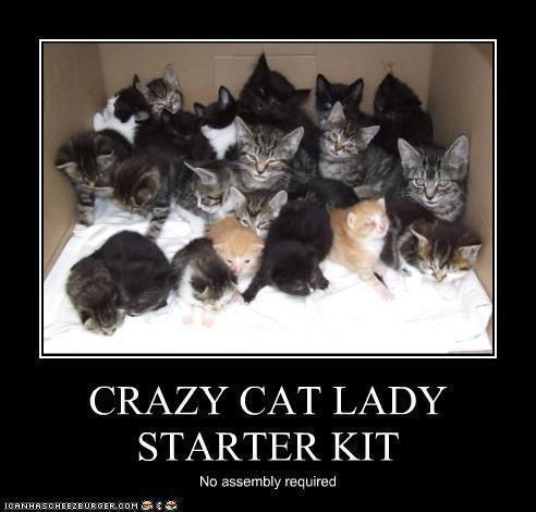 Unique Unusual Or Interesting  Crazy Cat Lady Starter Kit