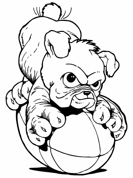 Bulldog Puppy Drawing   Clipart Panda   Free Clipart Images