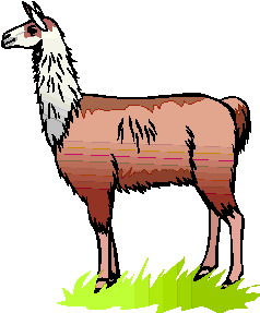 Related Pictures Llama Face Clip Art