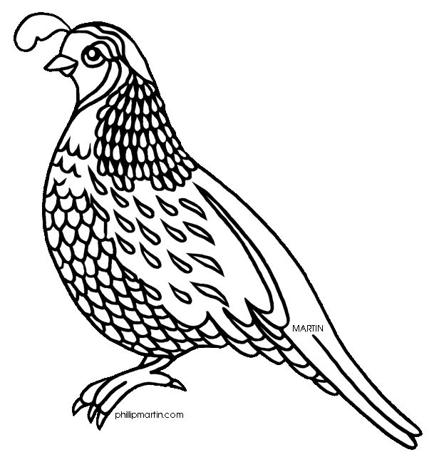 Quail Line Drawing   Google Search   Birds To Embroider   Pinterest