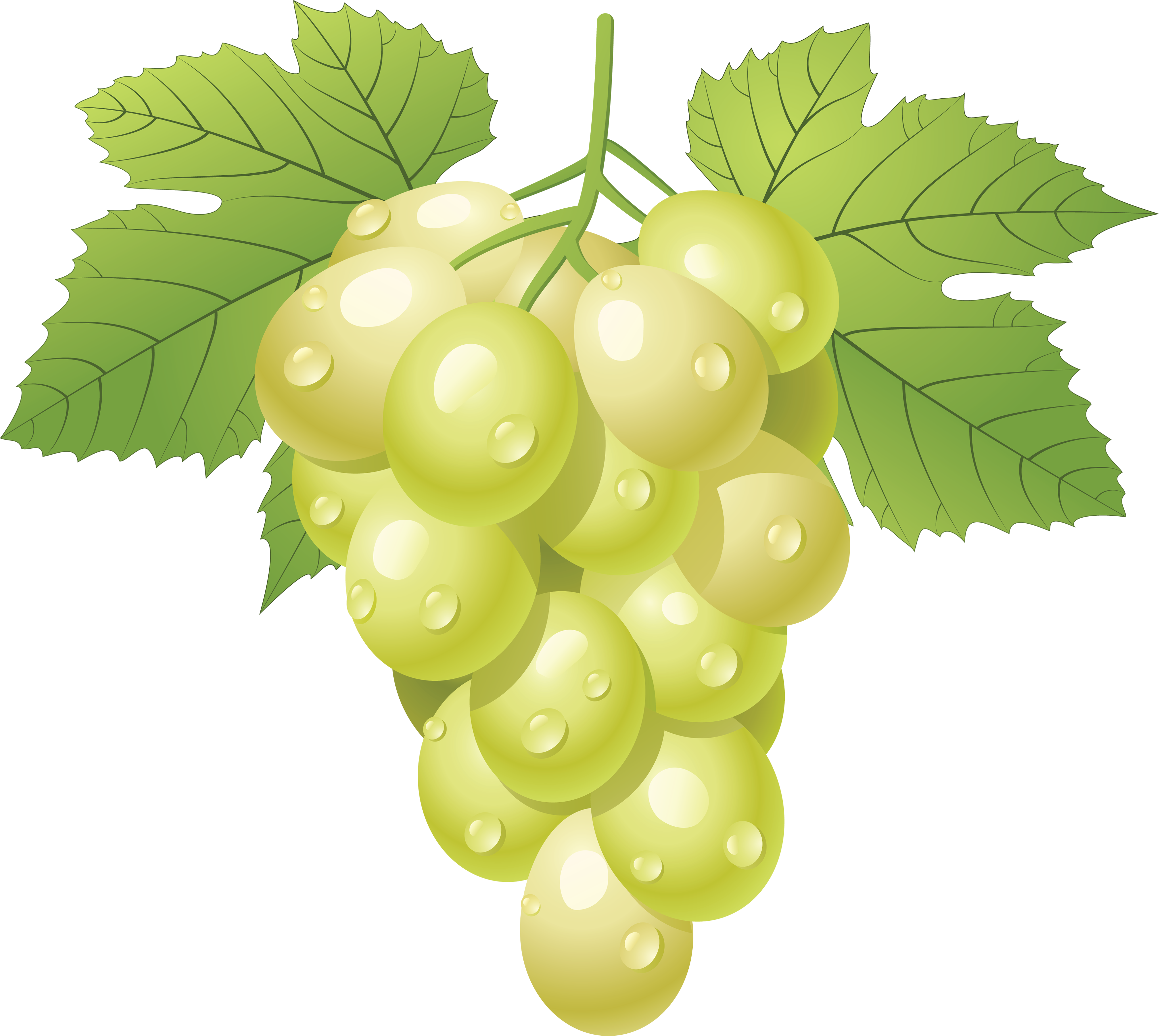Download Png Image  Green Grape Png Image