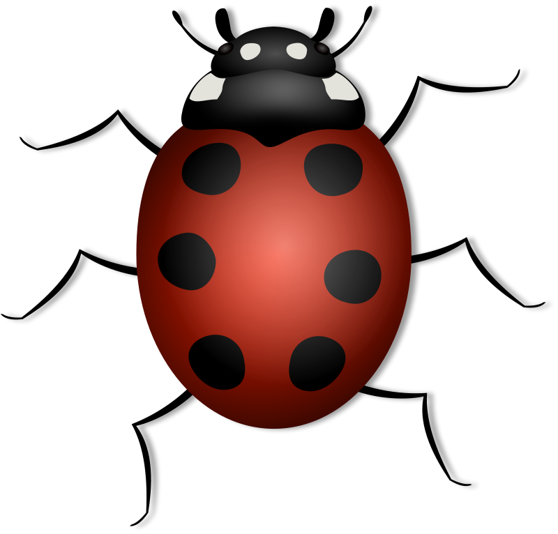 June Bug Clipart - Clipart Suggest