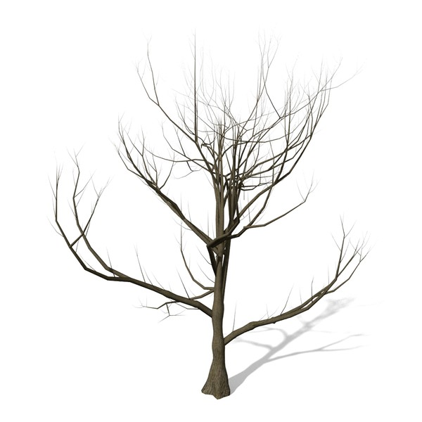 Brown Tree Without Leaves Clipart - Clipart Suggest