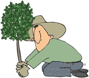 Clipart Image  Man Planting A Tree   Acclaim Stock Photography