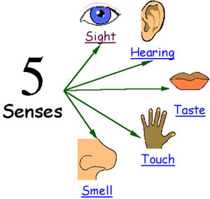 Senses Explained For Children   Hearing Touch Sight Smell And Taste