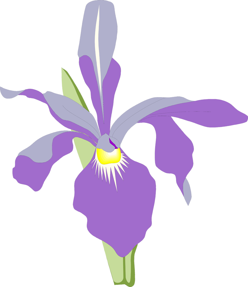 Orchid   Free Stock Photo   Illustration Of A Purple Orchid Flower