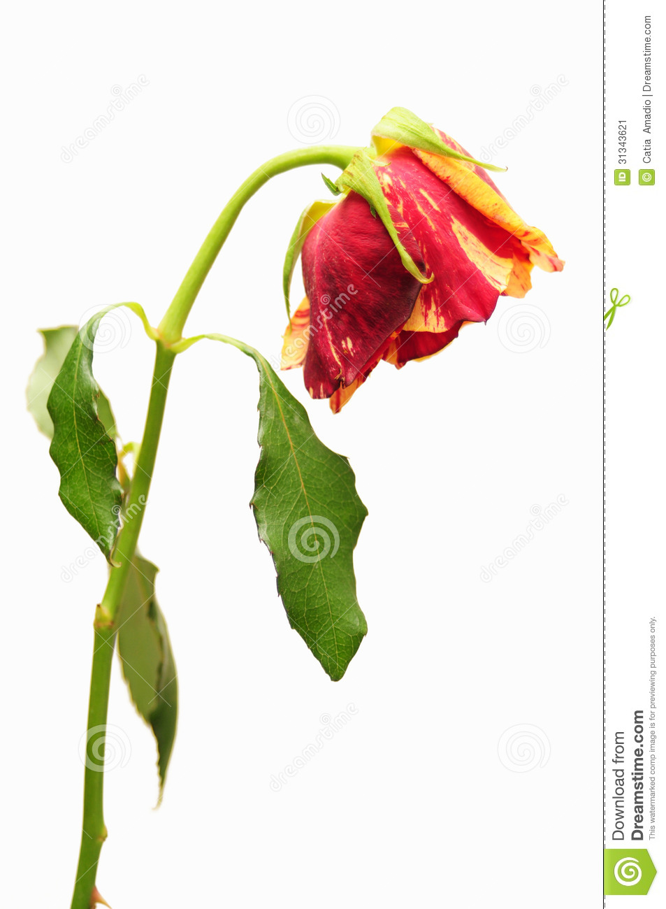 clipart dead flowers - photo #35