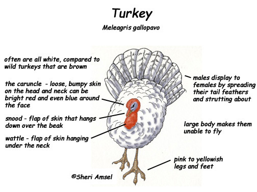 Turkey    Exploring Nature Educational Resource