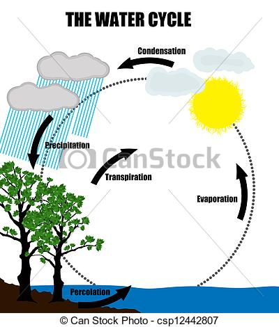 Evaporation Clipart The Water Cycl