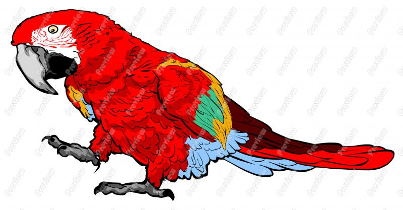 Parrot Character Clip Art   Royalty Free Clipart   Vector Cartoon