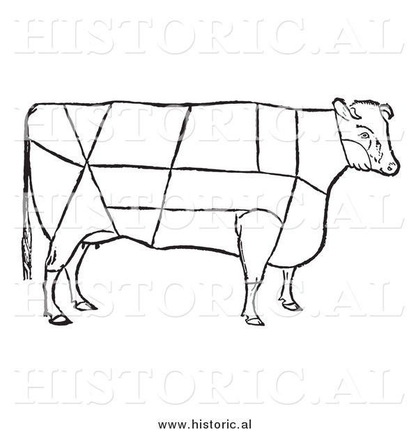 Clipart Of A Cow With Beef Cuts Outlined   Black And White Drawing By