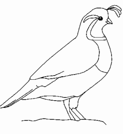 Quail Outline Clipart - Clipart Kid