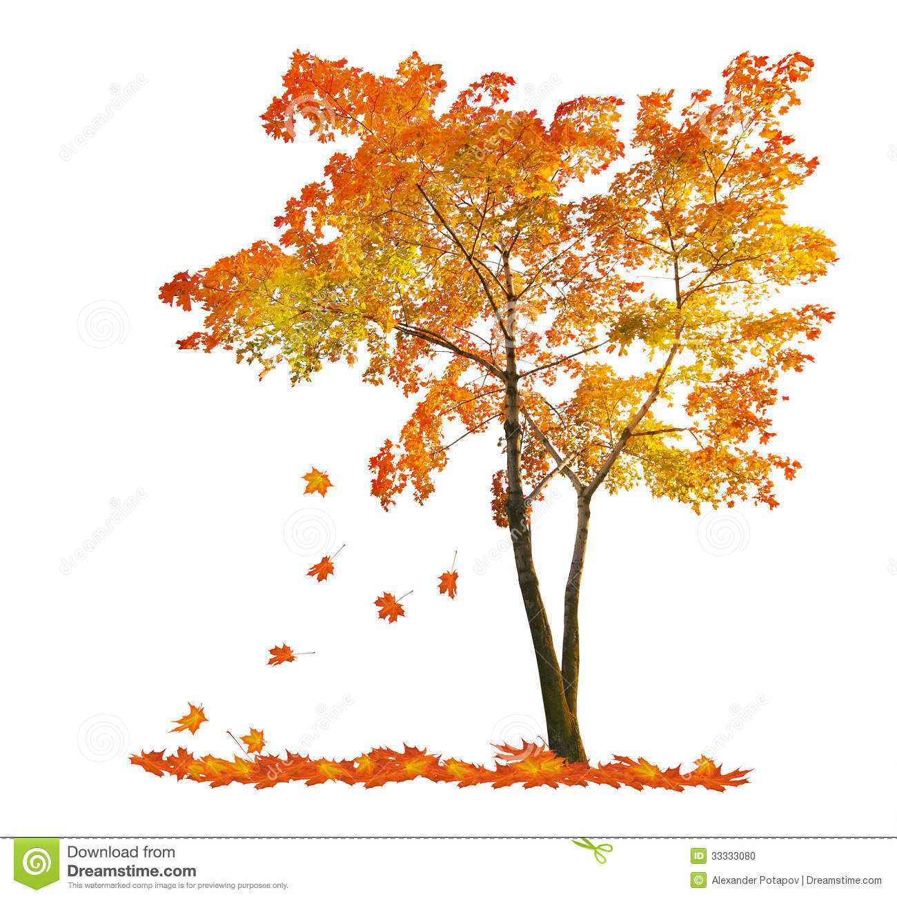 Autumn Trees And Leaves Falling