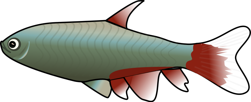 fish-clipart-png-animated-fish-clipart-qdKONL-clipart.png
