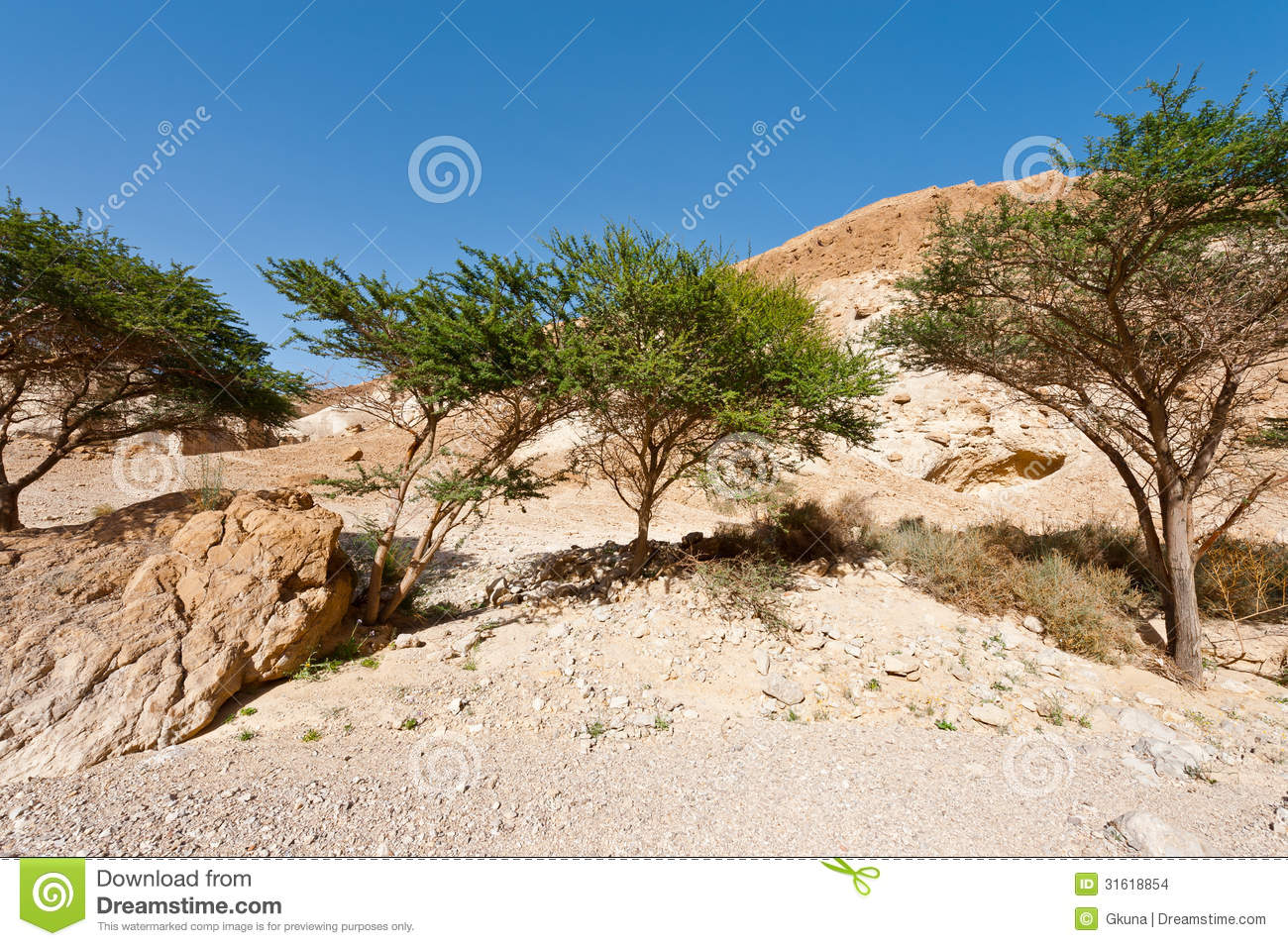 Green Trees In Desert On The West Bank Of The Jordan River