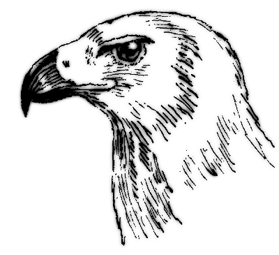 Beak Bw   Http   Www Wpclipart Com Animals Birds Bird Parts Beak