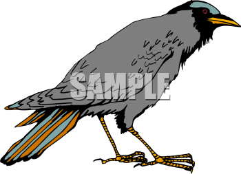 Bird Clipart Illustrations   Graphics   Bird Beak 125797 Tnb Png