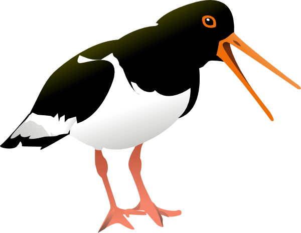Oyster Catcher Bird Clip Art At Clker Com   Vector Clip Art Online