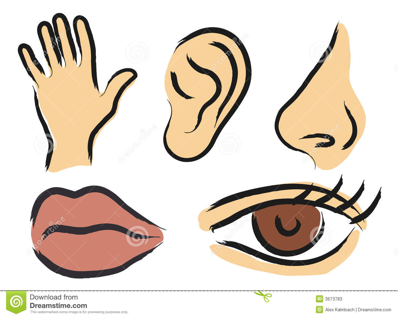 All Human Senses Clipart - Clipart Suggest
